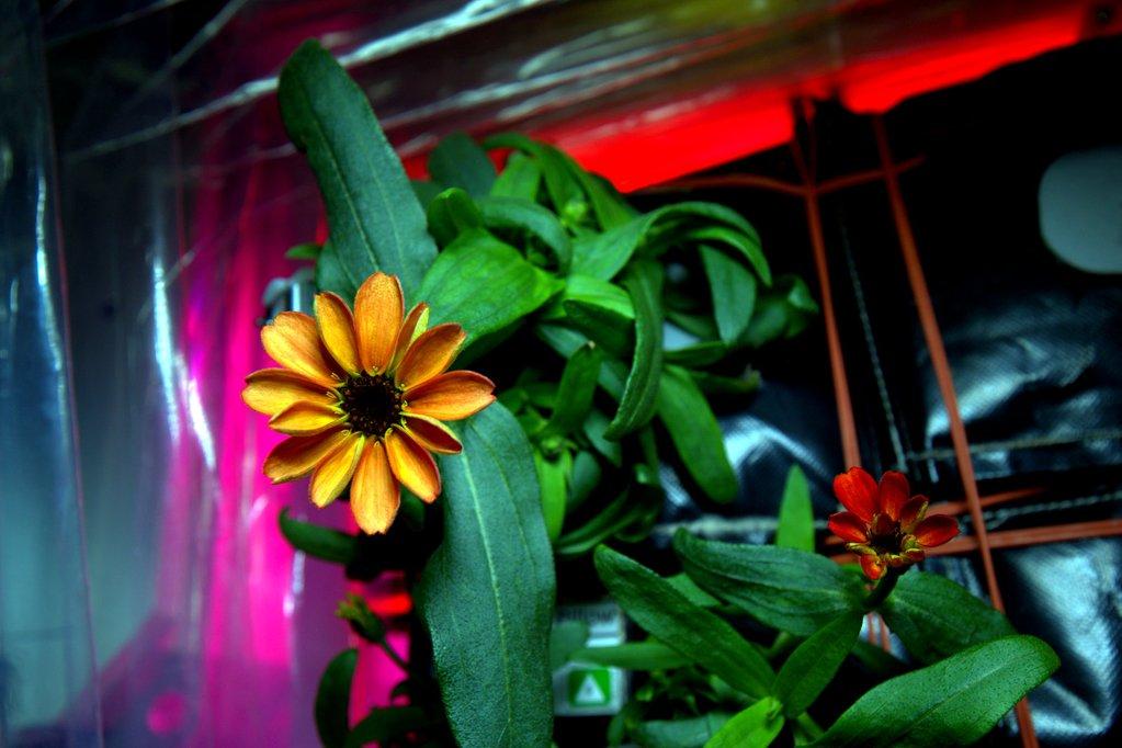 premiere-fleur-espace-02