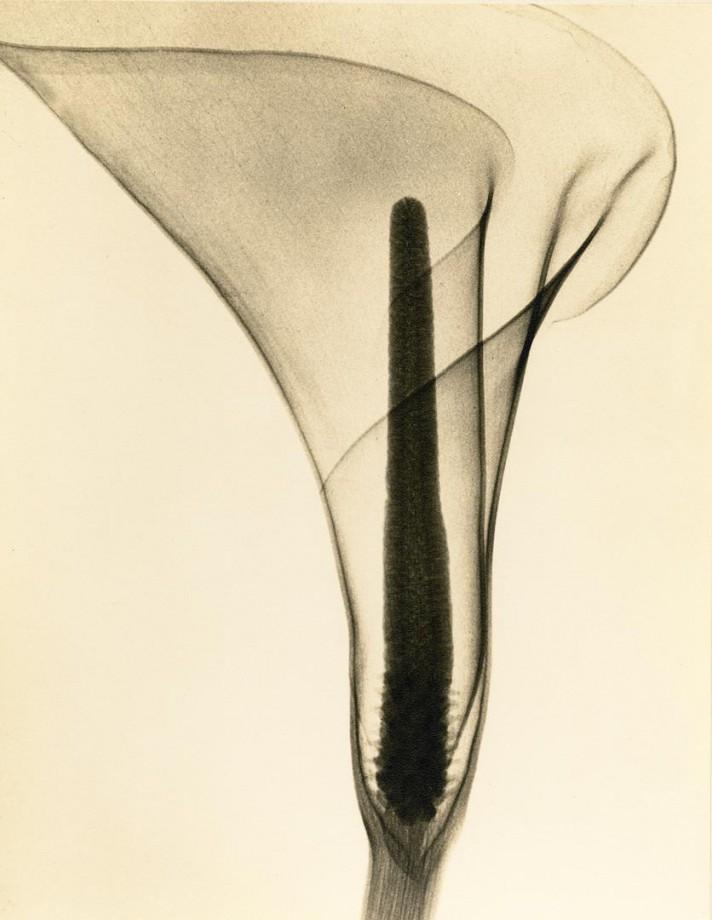 xray-fleur-04
