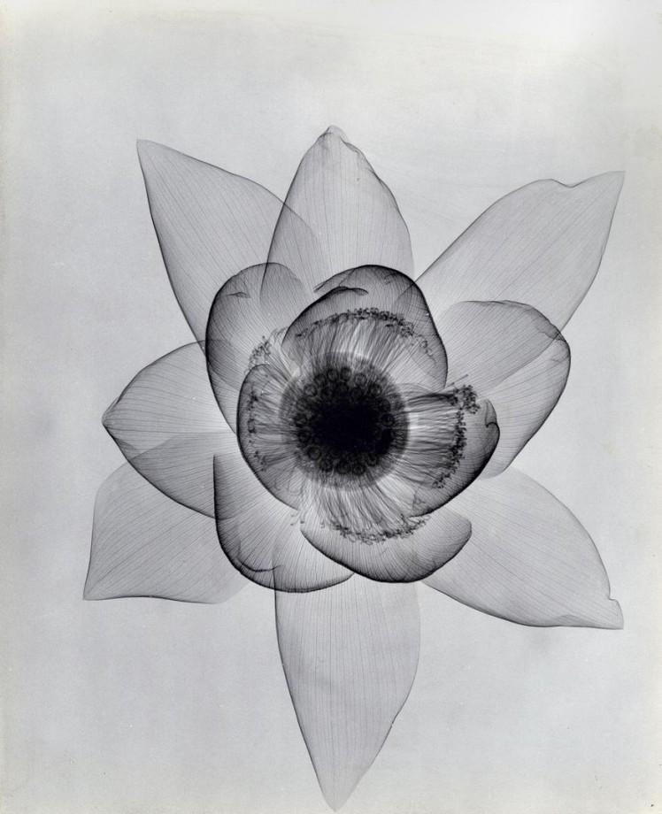 xray-fleur-07