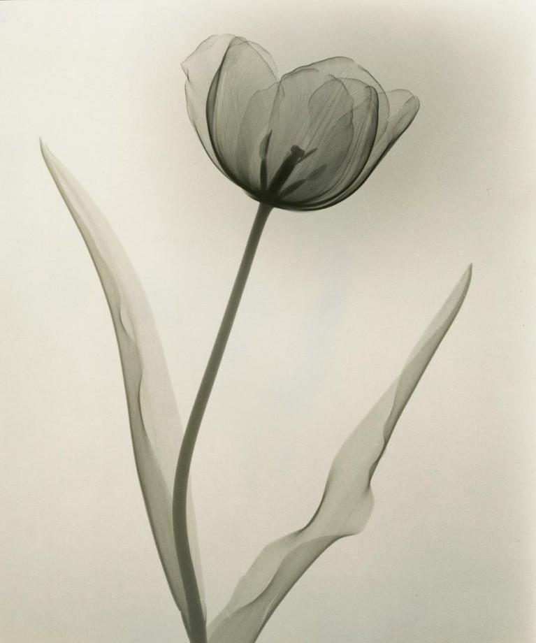 xray-fleur-08