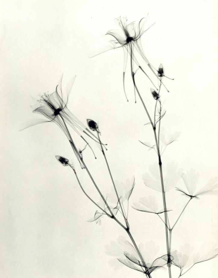 xray-fleur-09