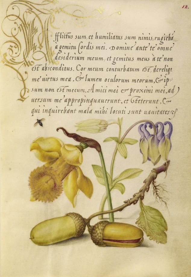Mira-calligraphiae-monumenta-07