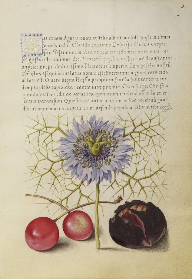 Mira-calligraphiae-monumenta-09