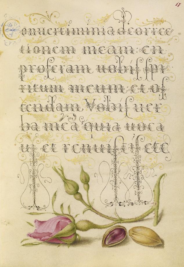 Mira-calligraphiae-monumenta-14