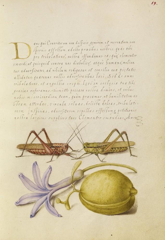 Mira-calligraphiae-monumenta-15
