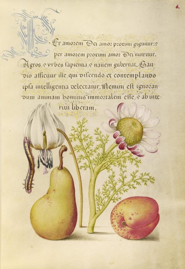 Mira-calligraphiae-monumenta-17