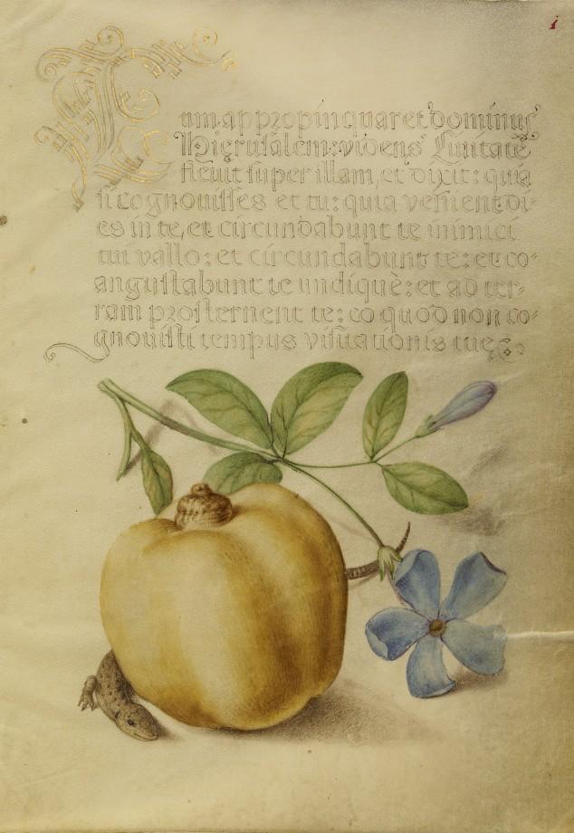Mira-calligraphiae-monumenta-19