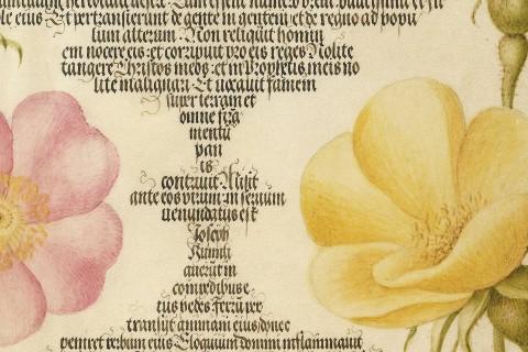 Mira-calligraphiae-monumenta-fea