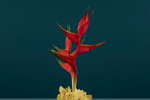 fleur-diplomatie-simmons-001