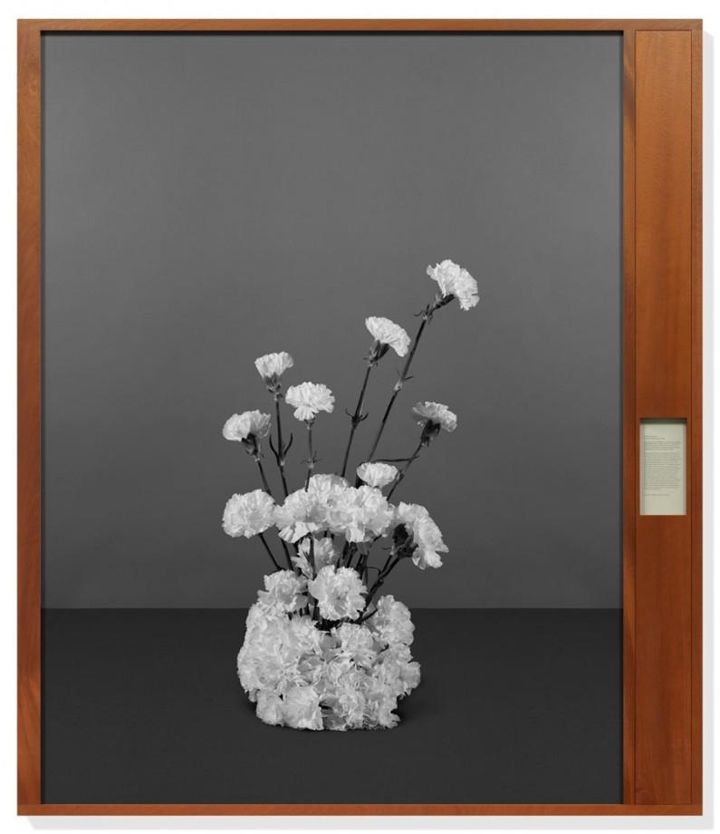 fleur-diplomatie-simmons-002