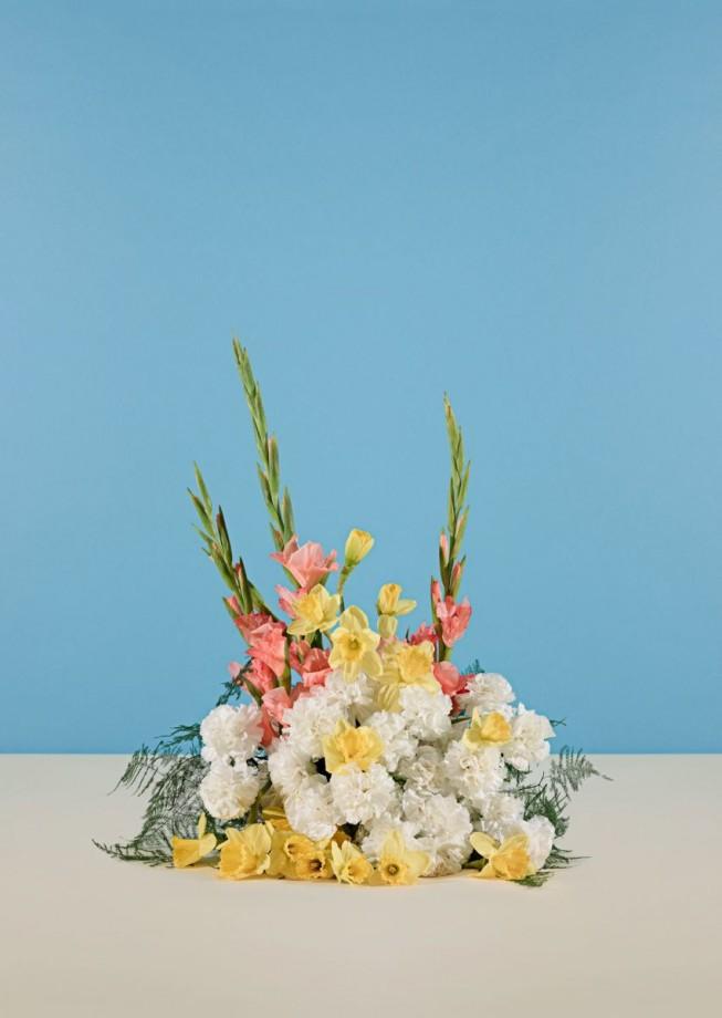 fleur-diplomatie-simmons-003