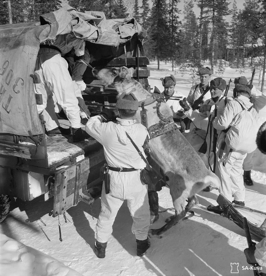 Des soldats finlandais chargent un renne dans un camion lors de la Guerre de Continuation