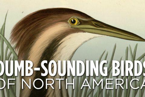 5 chants ridicules d'oiseaux d'Amérique du Nord