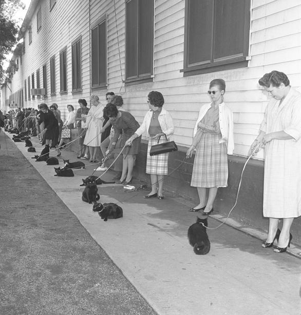 Casting_Cats