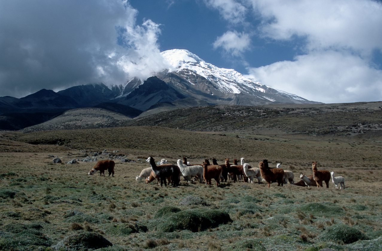 Chimborazo-montagne-record-hauteur-06