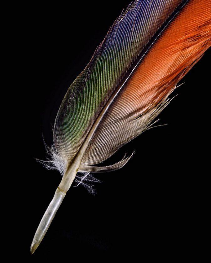 clarke-plume-oiseau-01
