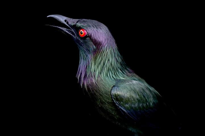 clarke-plume-oiseau-03