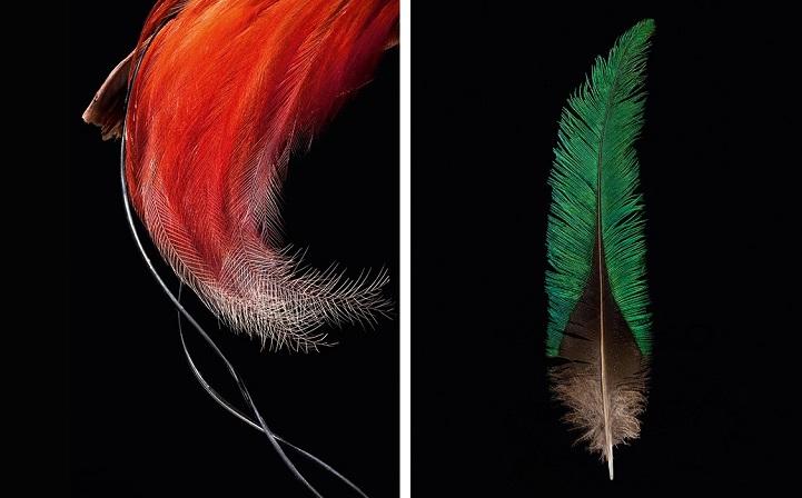 clarke-plume-oiseau-07