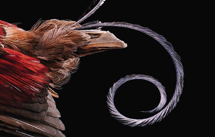 clarke-plume-oiseau-08