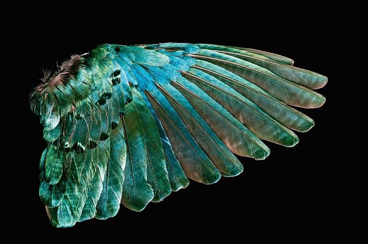 clarke-plume-oiseau-13