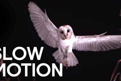 Des oiseaux au ralenti