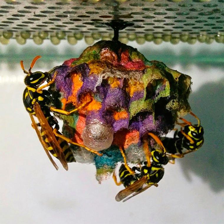 les gu pes font des nids multicolores si on leur donne du papier de couleur. Black Bedroom Furniture Sets. Home Design Ideas