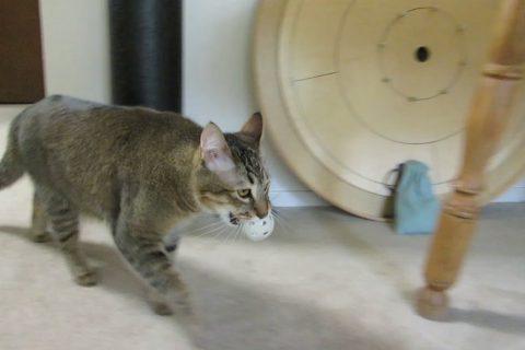 Il force son chat à chasser pour sa nourriture