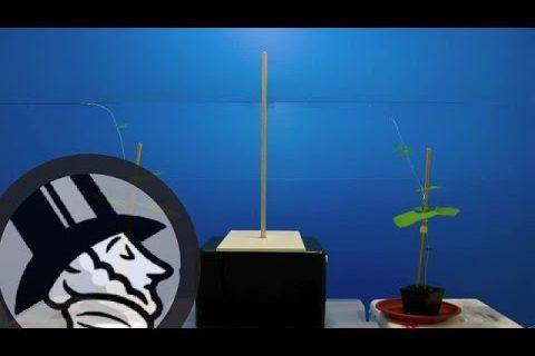 Le comportement des plantes