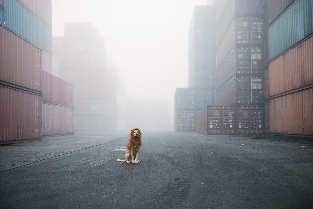 lion-chien-deguisement-01