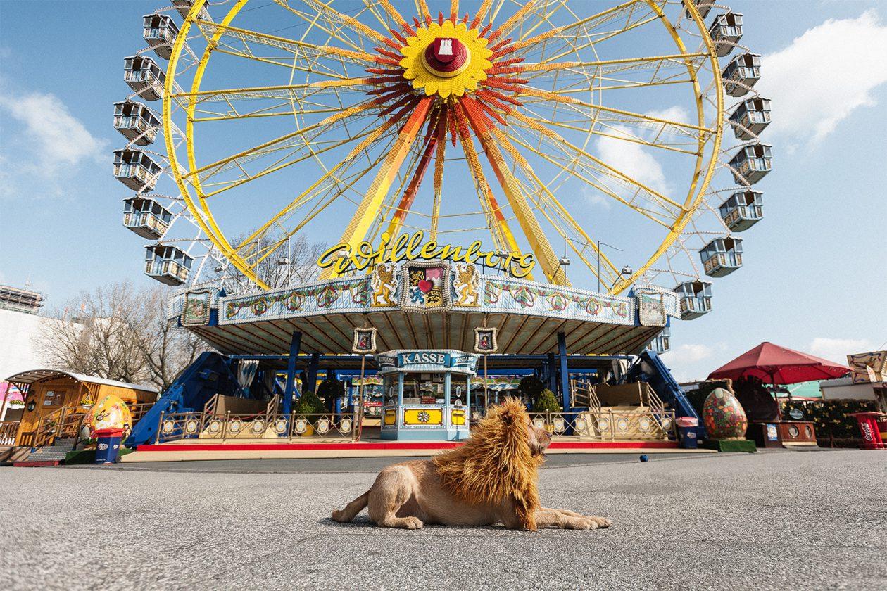 lion-chien-deguisement-05