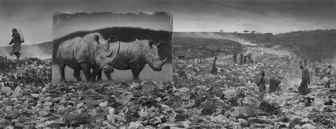 nick-brandt-animal-environnement-03