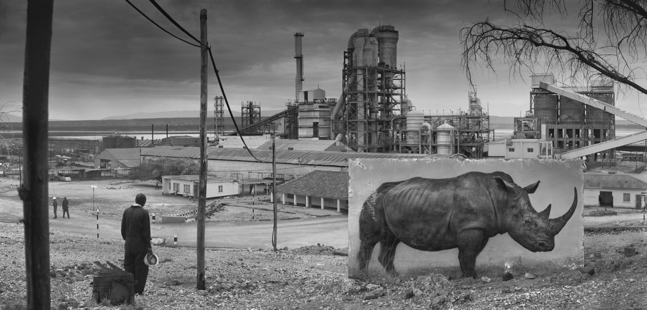 nick-brandt-animal-environnement-04