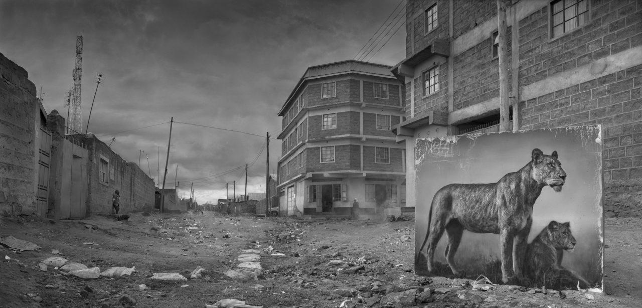 nick-brandt-animal-environnement-06