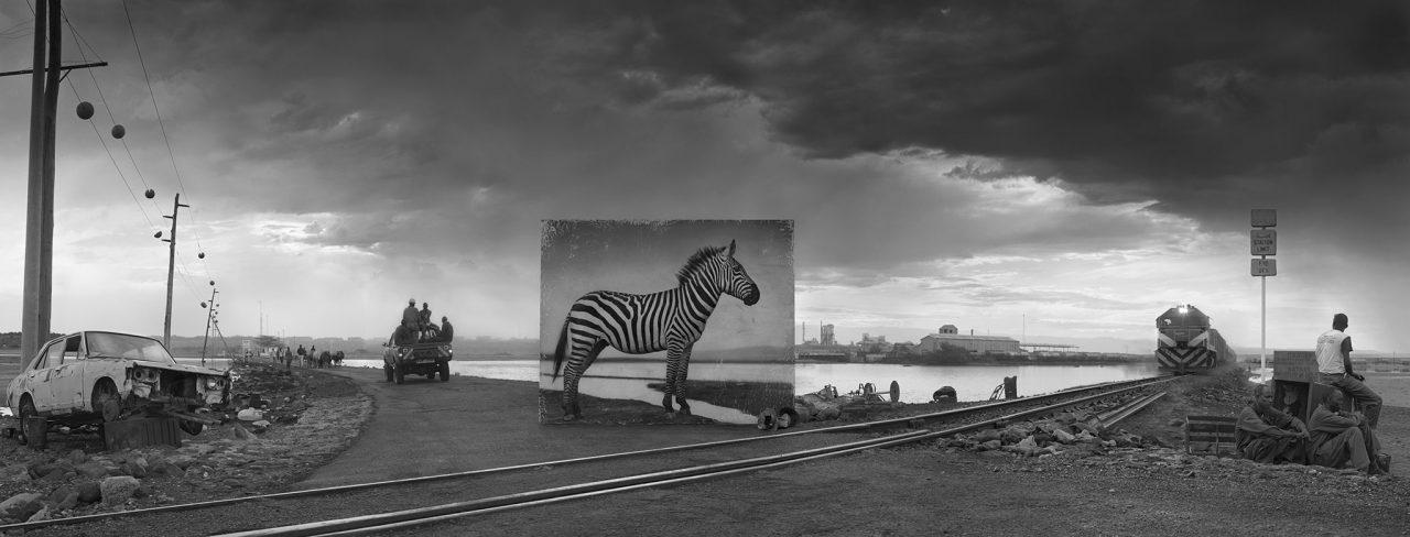 nick-brandt-animal-environnement-08