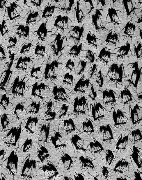 ombre-photo-multiplie-03