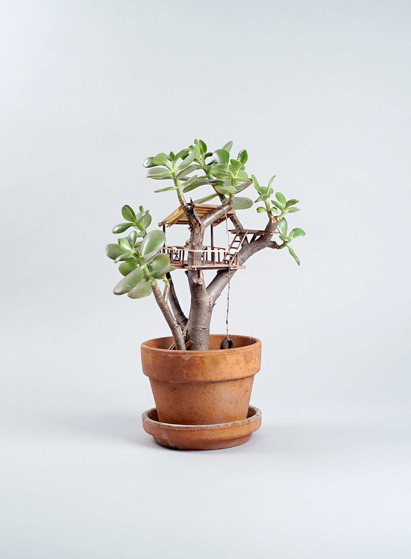 Plante cabane interieur 05 la boite verte for Macetas miniatura