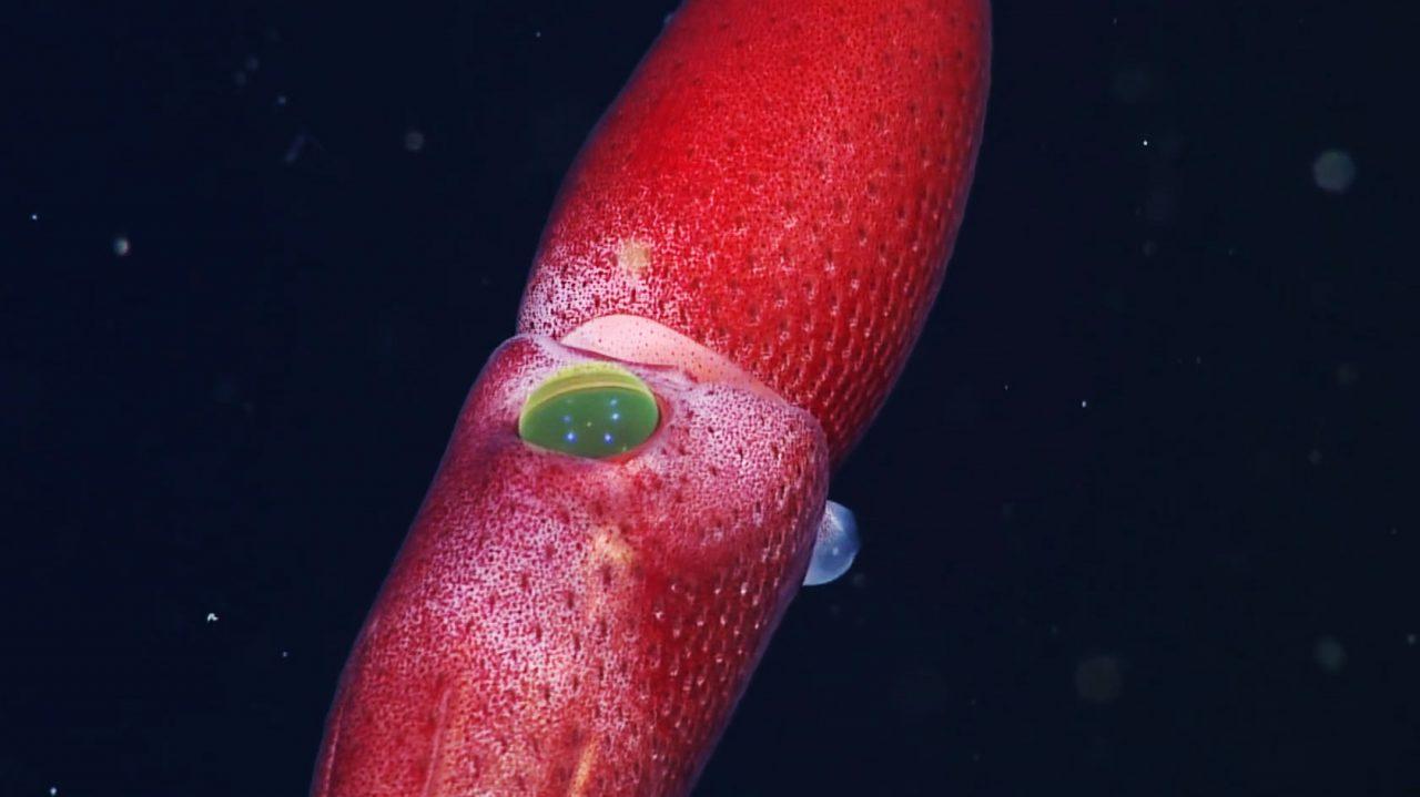 poulpe-fraise-03