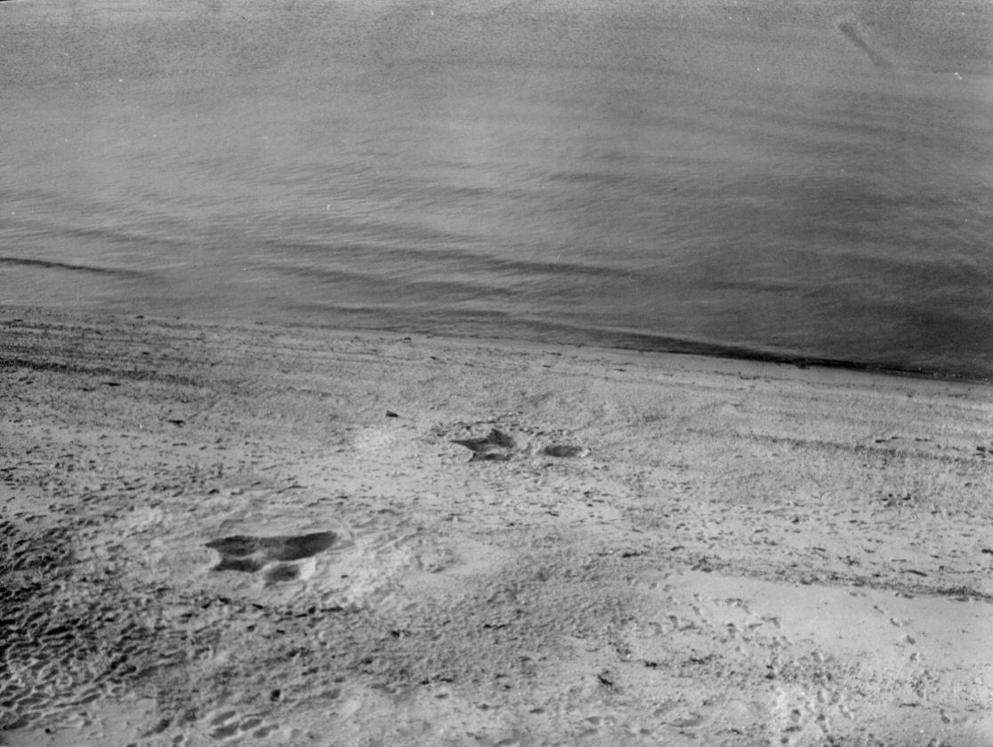 Sea-Serpent-Nantucket-Monstre-28
