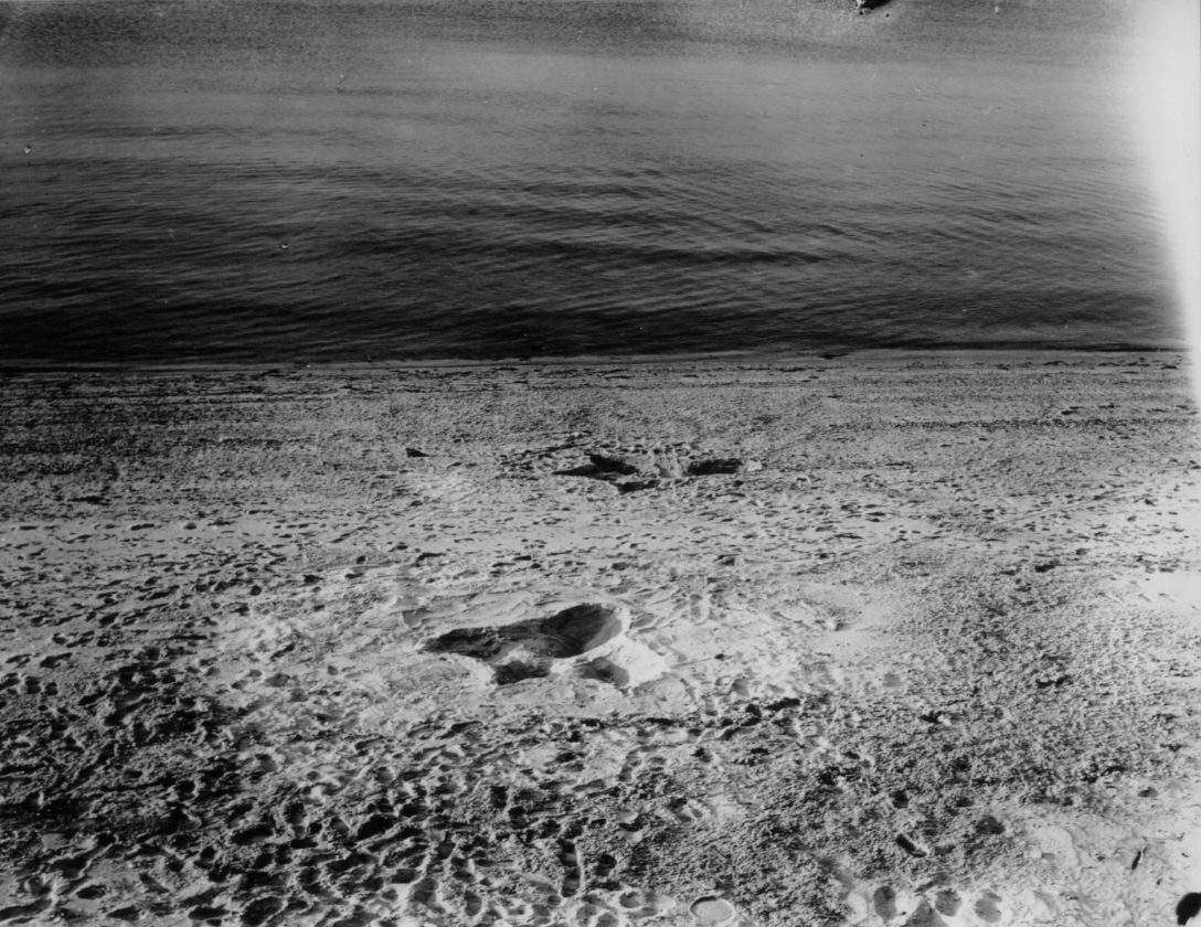 Sea-Serpent-Nantucket-Monstre-29