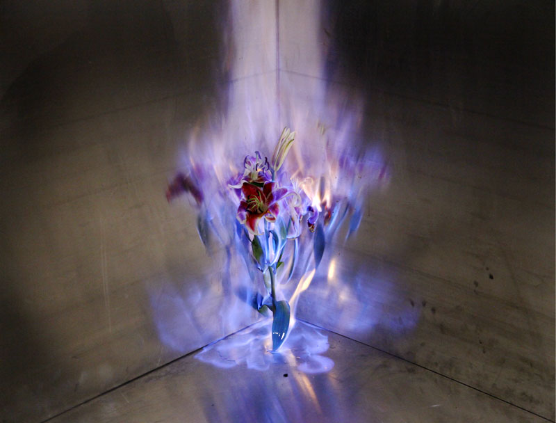 fleur-feu-01
