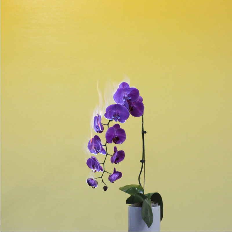 fleur-feu-02