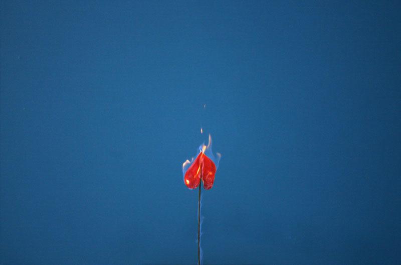 fleur-feu-03