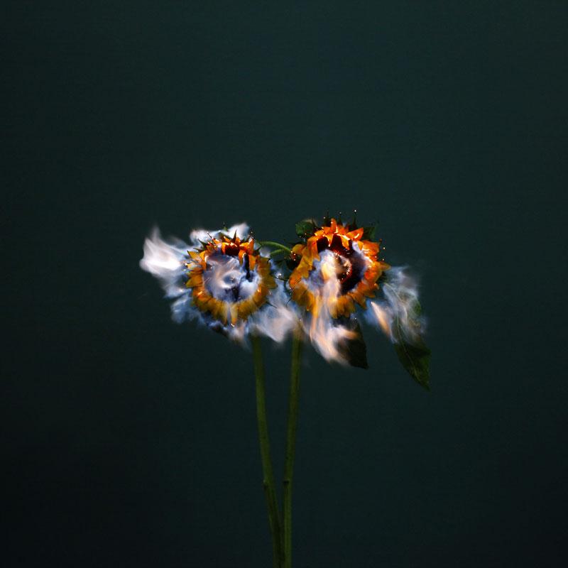 Fleur Feu 05 La Boite Verte