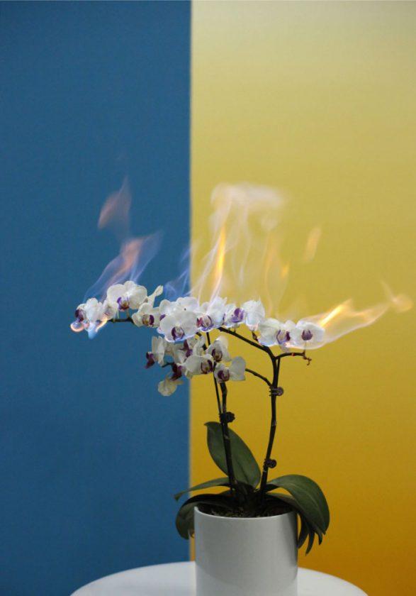 fleur-feu-08