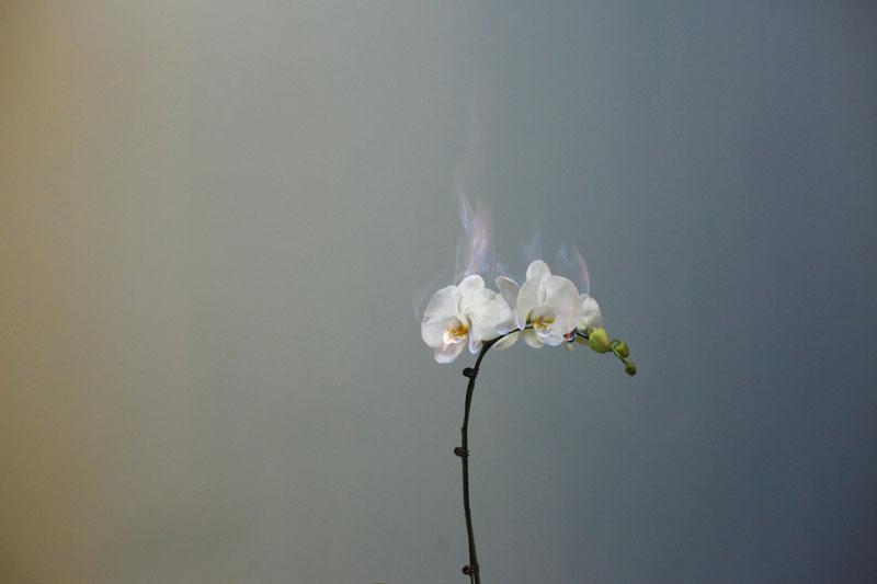 fleur-feu-09