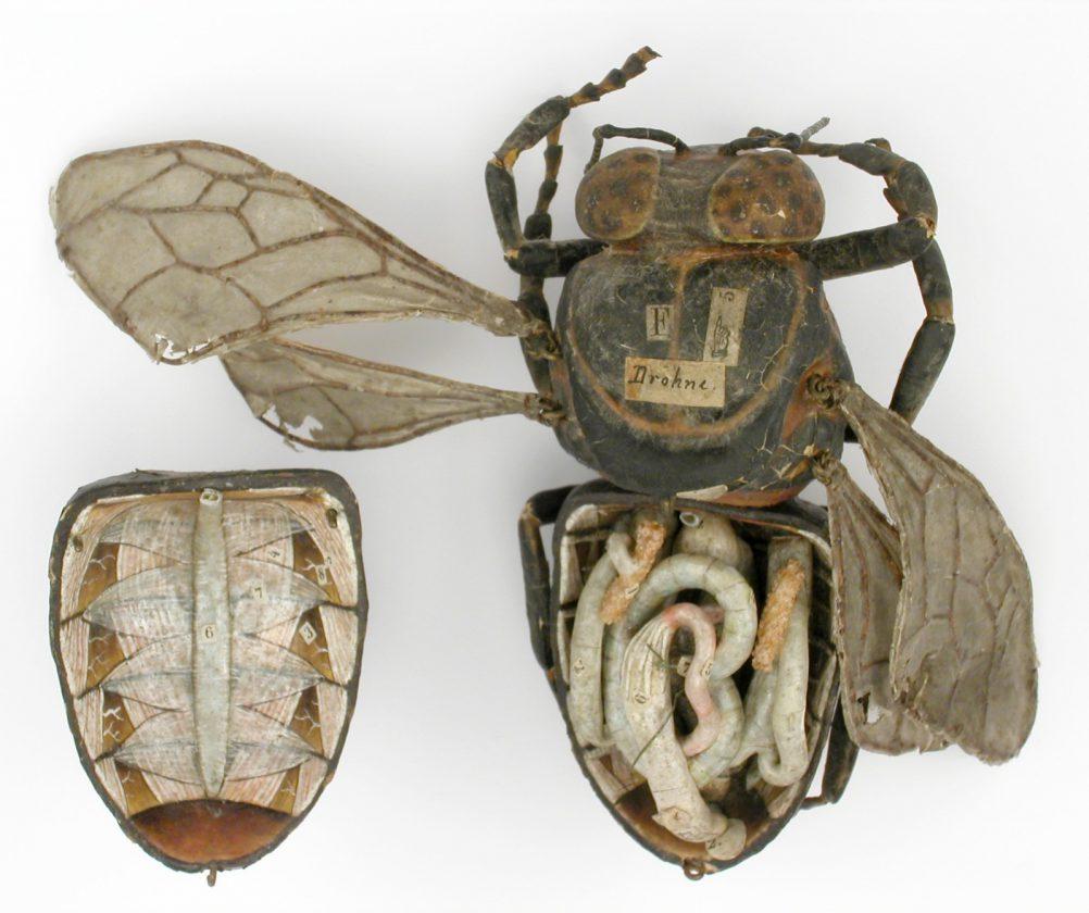modele-anatomique-docteur-Auzoux-1820-01