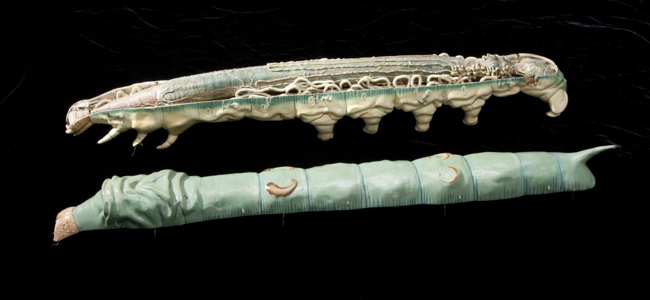 modele-anatomique-docteur-Auzoux-1820-03