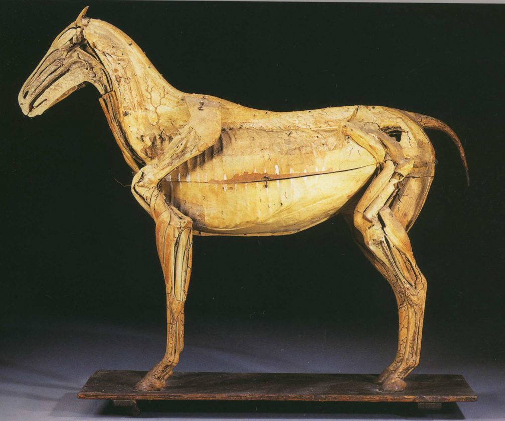 modele-anatomique-docteur-Auzoux-1820-06