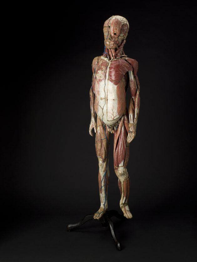 modele-anatomique-docteur-Auzoux-1820-07