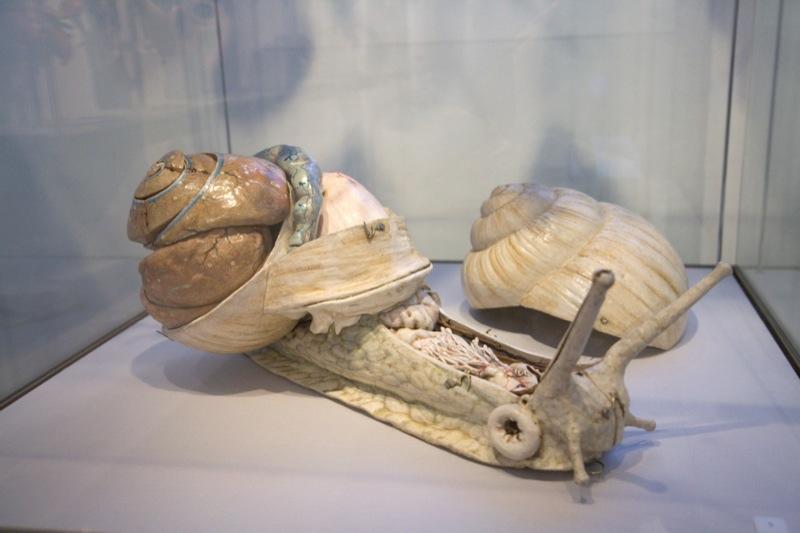 modele-anatomique-docteur-Auzoux-1820-20